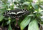 Park metuljev