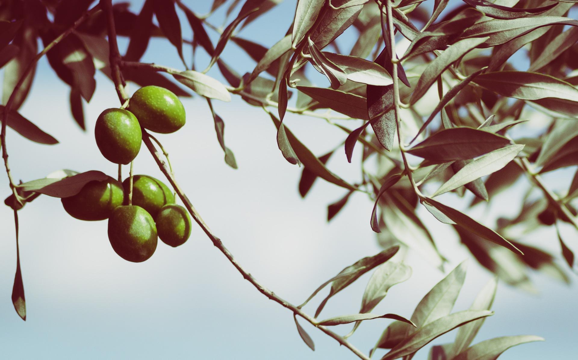 Sicilija – otok sonca in olivnega olja