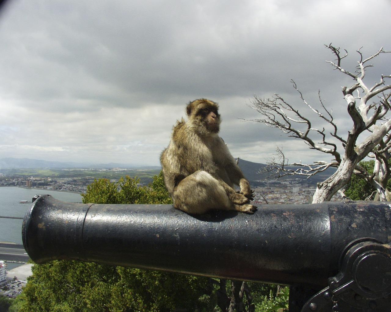 Gibraltar – mesto opic