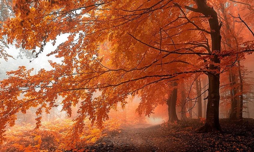 Čarobni šum gozdov